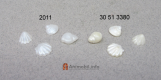 Seashells Set White 2